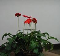 Květináče eshop